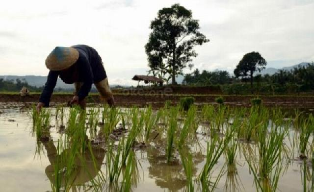 Petani Belum Sejahtera karena Salah Pemerintah