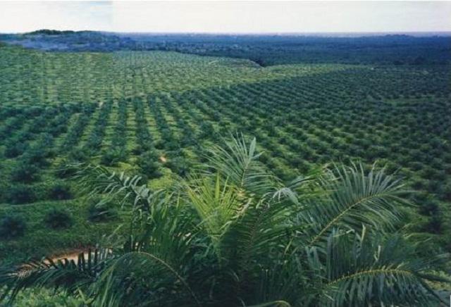 Data Ratusan Perusahaan Sawit di Riau Tak Berizin ada di KPK