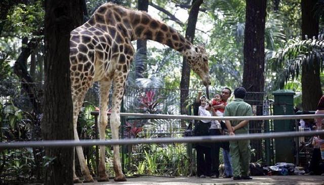 Bertepatan dengan Sidang Ahok, Taman Margasatwa Ragunan Tutup