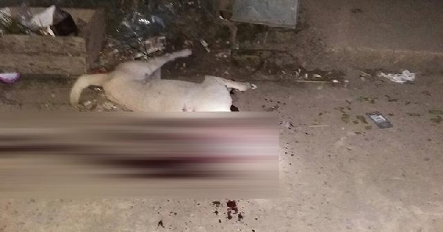 2 Bocah di Palembang tewas diserang anjing liar