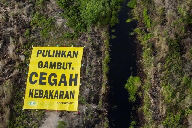 Presiden komitmen restorasi lahan gambut di 7 provinsi