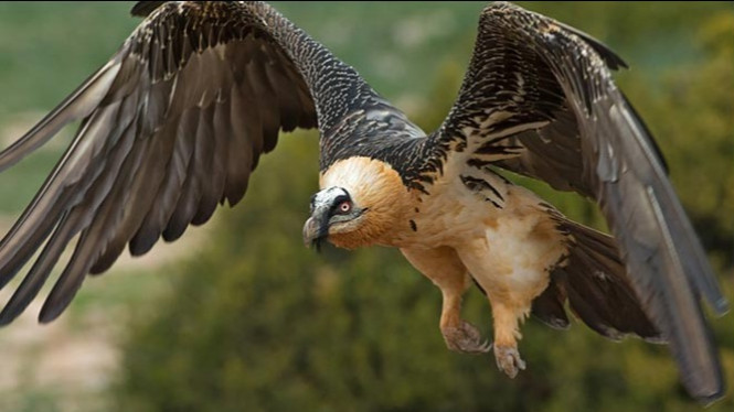 10 Burung Paling Berbahaya Di Duni