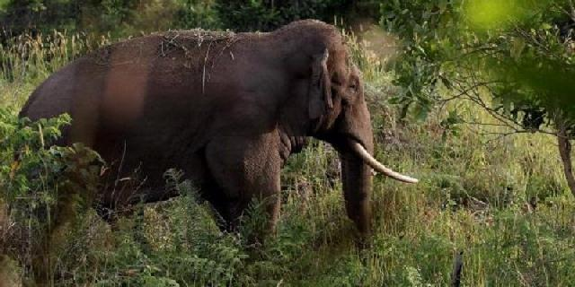 Kawanan gajah liar ganggu permukiman warga