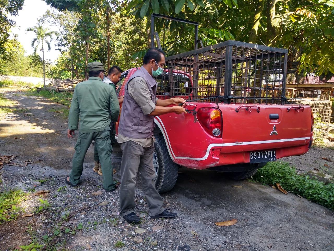 BBKSDA Riau Pasang Perangkap di Lokasi Penerkaman Harimau