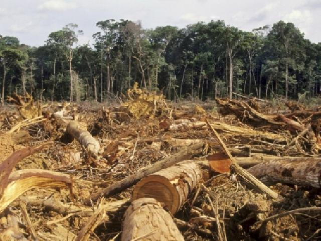 35 Ribu Hektar Kebun di Kuansing Dibangun di Lahan Illegal