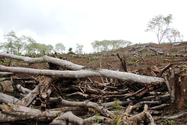 PT MAL Diduga Rambah Hutan Lindung Bukit Betabuh Menjadi Perkebunan Sawit