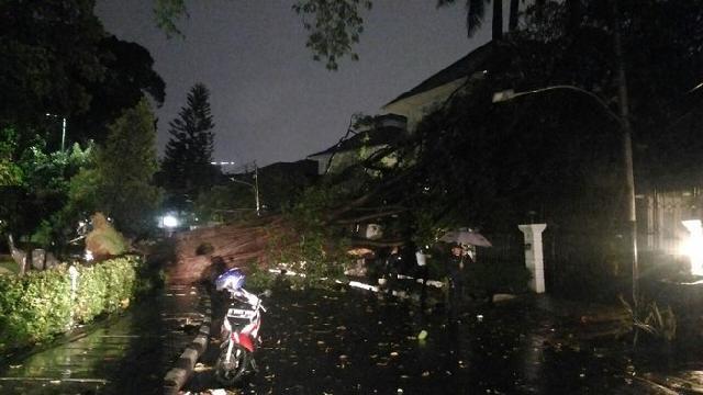 Pohon besar dekat rumah pemenangan Ahok-Djarot tumbang
