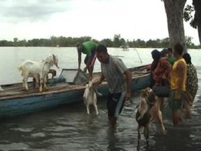 Banjir Ancam Keselamatan Hewan Ternak Masyarakat Inhu