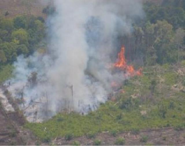 Asosiasi Pengusaha Hutan Indonesia Minta Pemerintah Komit Cegah Kebakaran Lahan Gambut