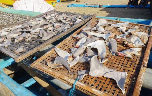 perdagangan opsi sirip hiu